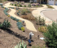 Showcase Your Yard Makeover in Otay's WaterSmart Landscape Contest
